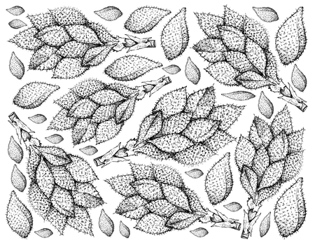 Tropical Fruits, Illustration Wallpaper Background of Hand Drawn Sketch Luk Rakam or Salacca Wallichiana Fruits. Ilustrace