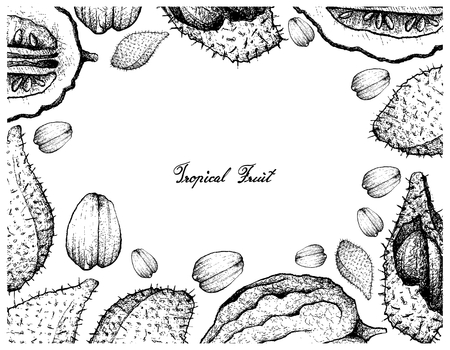Tropical Fruits, Illustration Frame of Hand Drawn Sketch Luk Rakam or Salacca Wallichiana and Etrog Fruits Isolated on A White Background.