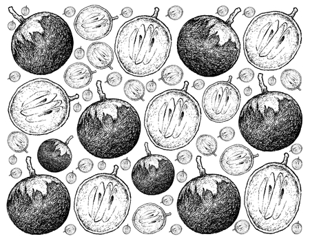 Tropical Fruit, Illustration Wallpaper Background of Hand Drawn Sketch of Star Apple or Chrysophyllum Cainito Fruits. Stock Photo