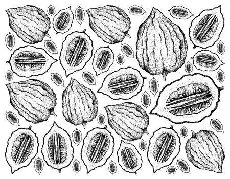 Tropical Fruit, Illustration Wallpaper Background Hand Drawn Sketch of Etrog Fruits, Essential Nutrient for Life with Vitamin C. Banco de Imagens
