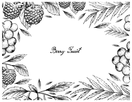Berry Fruits, Illustration Frame of Hand Drawn Sketch Delicious Fresh Blue Raspberries and Rowanberries Isolated on White Background. Vettoriali