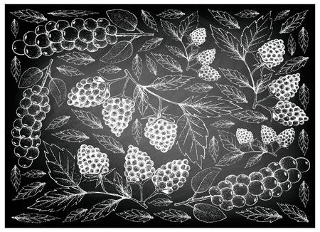 Berry Fruit, Illustration Wallpaper of Hand Drawn Sketch of Antidesma Thwaitesianum and Blackberries on Black Chalkboard.
