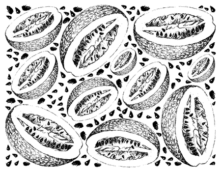 Exotic Fruit, Illustration Wallpaper Background of Hand Drawn Sketch of Chiverre, Figleaf Gourd or Cucurbita Ficifolia Fruits. High in Vitamin C, B3, B5 and B6 with Essential Nutrient for Life. Stock Vector - 98848250