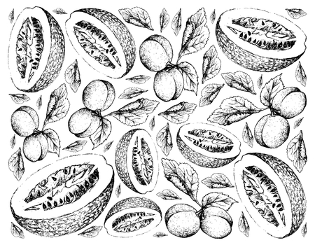Exotic Fruits, Illustration Wallpaper Background of Hand Drawn Sketch of Fresh European Plum or Prunus Domestica and Chiverre, Figleaf Gourd or Cucurbita Ficifolia Fruit Isolated on White Background. Çizim