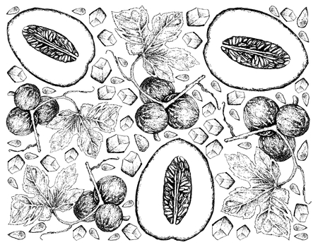 Exotic Fruit, Illustration Wallpaper Background of Hand Drawn Sketch of Honeydew Melon or Cucumis Melo and Native Bryony, Striped Cucumber or Diplocyclos Palmatus Fruits.