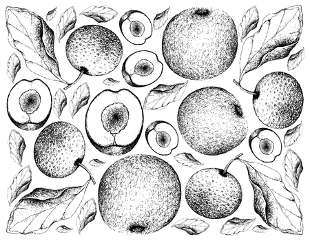 Exotic Fruits, Illustration Wallpaper Background of Hand Drawn Sketch  Plums or  and Nashi Pears, Chinese Pears or Pyrus Pyrifolia Fruits.