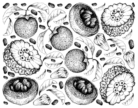 Exotic Fruit, Illustration Wallpaper Background of Hand Drawn Sketch of Pindaiva, Pindaiba, Pindauva or Perovana and Australian Black Sapote or Chocolate Pudding Fruits.