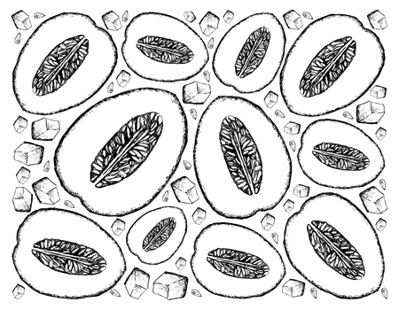 Exotic Fruit, Illustration Wallpaper Background of Hand Drawn Sketch of Honeydew Melon or Cucumis Melo Fruits. A Good Source of Vitamin B Complex with Essential Nutrient for Life. Illustration