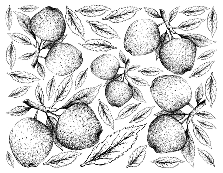 Exotic Fruit, Illustration Wallpaper Background of Hand Drawn Sketch of Apple or Malus Pumila Fruits. High in Vitamin C, K, B6 and Riboflavin with Dietary Fiber.