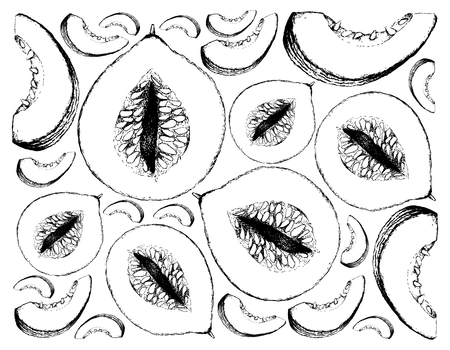 Exotic Fruit, Illustration Wallpaper Background of Hand Drawn Sketch of Casaba Melon Fruits. High in vitamin A, C and B6 with Essential Nutrient for Life.   Illustration