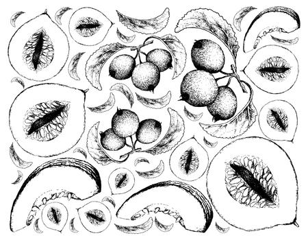 Exotic Fruit, Illustration Wallpaper Background of Hand Drawn Sketch of Casaba Melon and Crabapple or Malus Fruits. Standard-Bild - 98850425