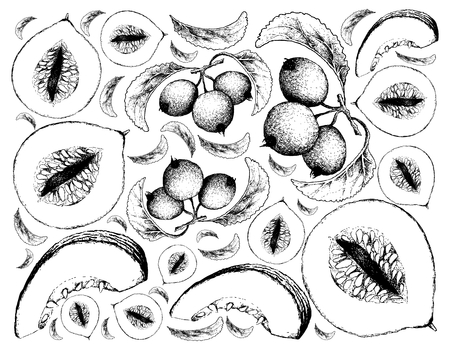 Exotic Fruit, Illustration Wallpaper Background of Hand Drawn Sketch of Casaba Melon and Crabapple or Malus Fruits. Illustration