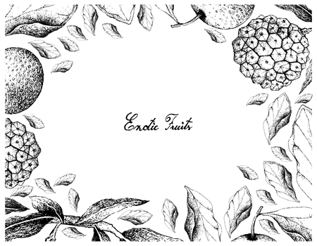 Exotic Fruits, Illustration Frame of Hand Drawn Sketch of Nashi Pears, Chinese Pears or Pyrus Pyrifolia Fruits Isolated on White Background.
