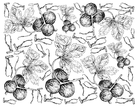 Vegetable and Fruit, Illustration Wallpaper Background of Hand Drawn Sketch of Native Bryony, Striped Cucumber or Diplocyclos Palmatus Fruits.