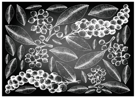 Berry Fruit, Illustration Wallpaper Background of Hand Drawn Sketch of Carallia Brachiata and Antidesma Thwaitesianum Fruits on Black Chalkboard.