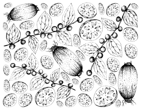 Vegetable and Fruit, Illustration Wallpaper Background of Hand Drawn Sketch Lotus or Water Lily Roots and Jackal Jujube or Ziziphus Oenoplia Fruits