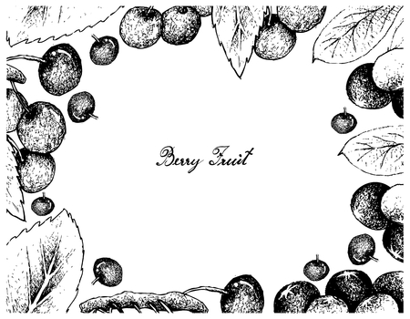Berry Fruit, Illustration Frame of Hand Drawn Sketch of Acai Berries or Euterpe Oleracea Fruits and Cherries.  Illustration
