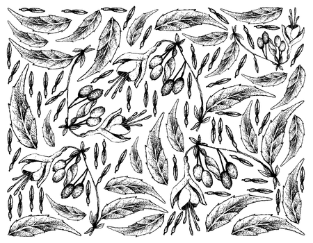 Berry Fruit, Illustration Wallpaper Background of Hand Drawn Sketch Bunch of Brinco de Princesa or Fuchsia Regia Fruits Isolated on White Background.  Vectores