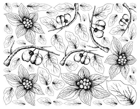 Tropical Fruits, Illustration Wallpaper Background of Hand Drawn Sketch Acerola Cherries or Malpighia Emarginata and Bunchberry, Dwarf Cornel or Cornus Suecica Fruits.