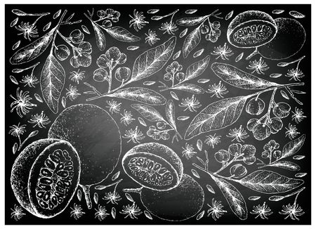 Tropical Fruits, Illustration Wallpaper Background of Hand Drawn Sketch of Acronychia Pedunculata and Passion Fruit or Passiflora Edulis on Black Chalkboard.