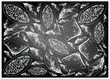 Tropical Fruits, Illustration Wallpaper Background of Hand Drawn Sketch Cambuci or Campomanesia Phaea Fruit on Black Chalkboard.