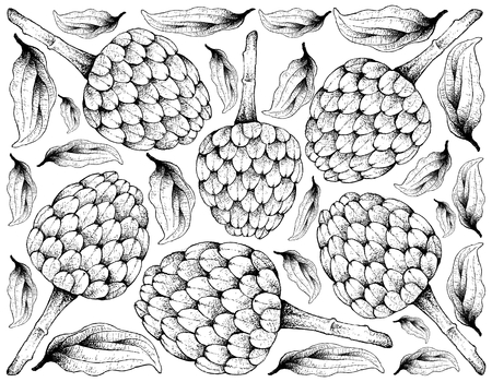 Tropical Fruit, Illustration Wallpaper of Hand Drawn Sketch of Cherimoya, Annona Cherimola Fruit Isolated on White Background. A Rich Source of Vitamin C with Essential Nutrient for Life.