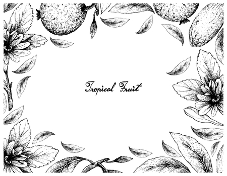 Tropical Fruits, Illustration Frame of Hand Drawn Sketch of Banana Passionfruit or Passiflora Mollissima and Borojo or Alibertia Patinoi Fruits Isolated on A White Background.
