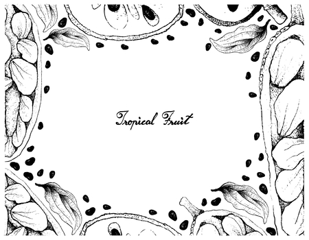 Tropical Fruit, Illustration Frame of Hand Drawn Sketch of Cherimoya, Annona Cherimola and Cempedak or Artocarpus Integer Fruits Isolated on White Background.