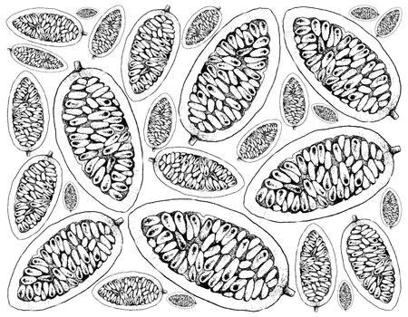 Tropical Fruits, Illustration Wallpaper of Hand Drawn Sketch of Banana Passionfruit or Passiflora Mollissima Fruits Isolated on A White Background. High in Vitamin C and A With Essential Nutrient for Life.