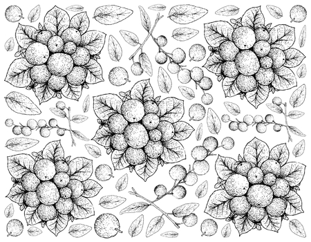 Tropical Fruits, Illustration Wallpaper of Hand Drawn Sketch Fresh Bitter Berries or Coralberries or Symphoricarpos Orbiculatus Fruits Isolated on White Background.