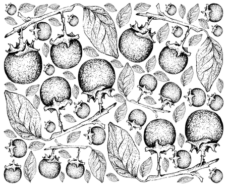Tropical Fruit, Illustration Wallpaper of Hand Drawn Sketch of Ripe and Sweet Ebony or Diospyros Rhodocalyx Fruits Isolated on White Background.  Illustration