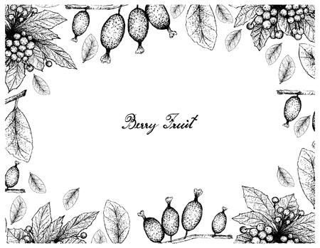 Berry Fruit, Illustration Frame of Hand Drawn Sketch of Christmas Berries or Ardisia Crenata and Elaeagnus Latifolia Fruits Isolated on White Background. Illustration