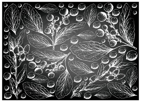 Berry Fruit, Illustration Wallpaper Background of Hand Drawn Sketch of Goji Berry or Lycium Barbarum and Orangeberry, Gin Berry or Glycosmis Pentaphylla Fruits on Black Chalkboard. Vettoriali