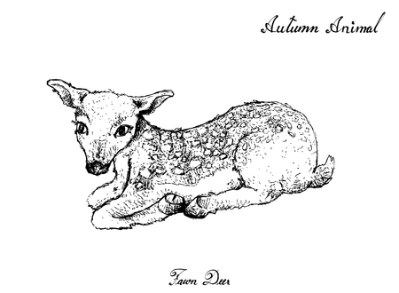 Autumn Animal, Illustration Hand Drawn of Fawn Deer Isolated on White Background. Symbolic Animal to Show The Signs of Autumn Season.