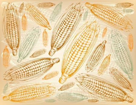 Autumn Vegetable, Illustration Wallpaper Background of Hand Drawn of Sweet Corns or Maizes with Husk and Silk. Symbolic Plant to Show The Signs of Autumn Season. Stock Photo