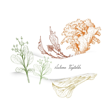 Autumn Vegetables, Illustration of Hand Drawn Sketch Lettuce or Lactuca Sativa, Paracress, Pak Choy and Rapini.