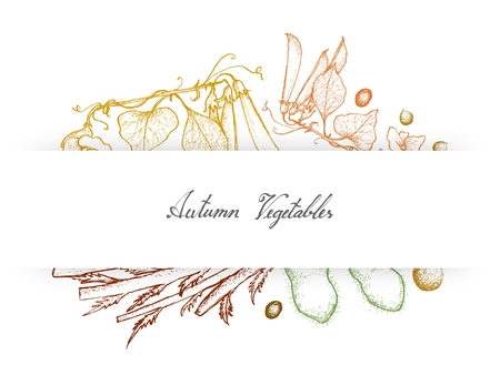 Autumn Vegetables, Illustration of Hand Drawn Sketch Green Peas, Soybean or Edamame and Celeriac or Turnip Rooted Celery.