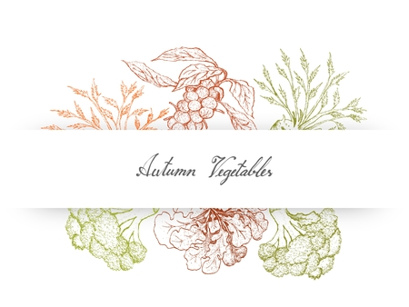 Autumn Vegetables, Illustration of Hand Drawn Sketch Delicious Fresh Green Brussels, Celeriac, Sprouts Broccoli and Broccoli Isolated on White Background.