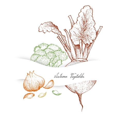 Autumn Vegetables and Herbs, Illustration of Hand Drawn Sketch Delicious Fresh Broccoli, Beetroot and Garlic.