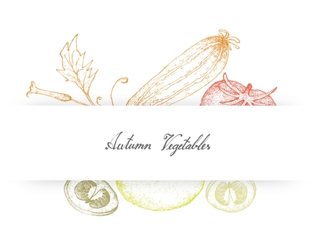 Vegetable and Herb, Illustration of Hand Drawn Sketch Delicious Fresh Ripe Red Tomatoes and Zucchini.