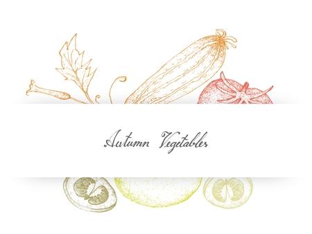 Groente en kruid, illustratie van Hand getrokken schets heerlijke verse rijpe rode tomaten en courgette.