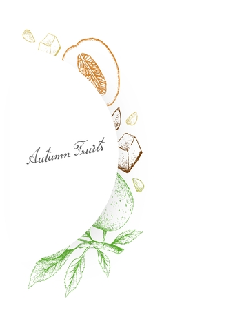 Autumn Fruits, Illustration Hand Drawn Sketch of Honeydew Melon or Cucumis Melo and Apple or Malus Pumila Fruits.