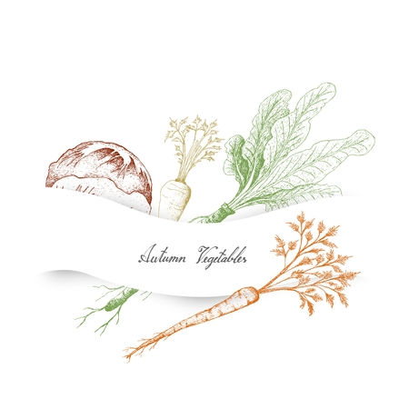 Autumn Vegetables, Illustration of Hand Drawn Sketch Delicious Fresh Green Radicchio or Italian Chicory, Hamburg Parsley and Horseradish or Armoracia Rusticana.