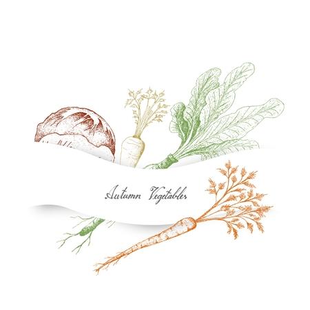 Autumn Vegetables, Illustration of Hand Drawn Sketch Delicious Fresh Green Radicchio or Italian Chicory, Hamburg Parsley and Horseradish or Armoracia Rusticana.