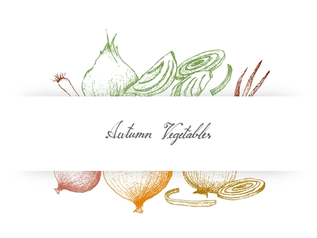 Autumn Vegetables and herbs, Illustration Hand Drawn Sketch of Onions and Spring Onions or Scallions Used for Seasoning in Cooking.