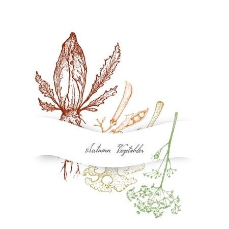 Autumn Vegetables, Illustration of Hand Drawn Sketch Delicious Fresh Chicory, Dill or Anethum Graveolens and Kale or Leaf Cabbage Plants.