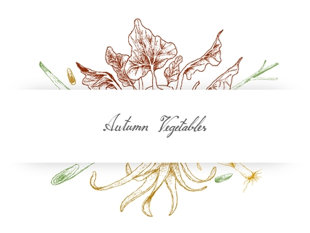 Autumn Vegetables and Herbs, Illustration of Hand Drawn Sketch Fresh Green Cabbage of Kohlrabi and Lemon Grass.