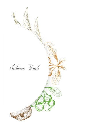 Autumn Fruits, Illustration Hand Drawn Sketch of Ripe Angel Peaches and Firethorn Berries or Pyracantha Fruits. Symbolic Fruits to Show The Signs of Autumn Season.