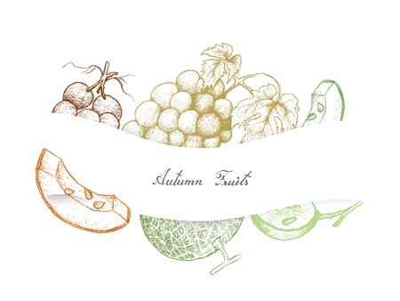 Autumn Fruits, Illustration Hand Drawn Sketch of Melons and Grapes. Symbolic Fruits to Show The Signs of Autumn Season.