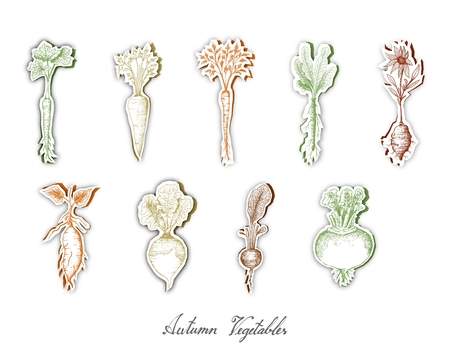 Autumn Vegetables, Set of Hand Drawn Sketch of Assorted Root Vegetables are Harvested in Autumn. Trendy Origami Deep Paper Art Carving Style.